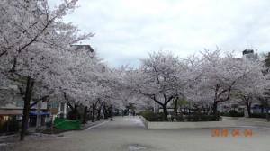 滝川公園1