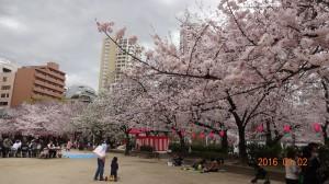 中大江公園